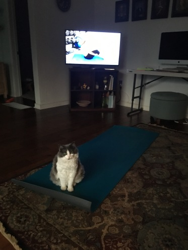 My pilates mat was invaded.